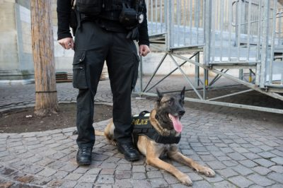 Police k9 excessive force