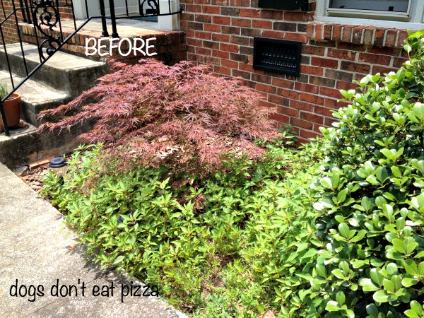 Do Maple Leaves Make Good Mulch