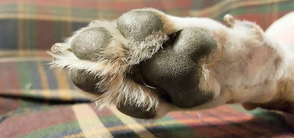 If Cat Toes Look Like Jelly Beans Then Dog Toes Look Like