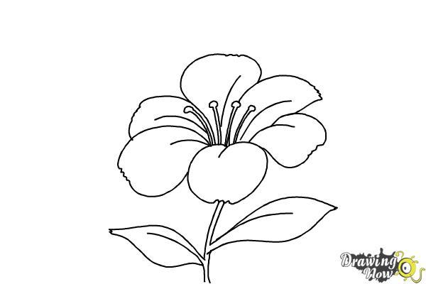 Draw Flower Easy Alabama
