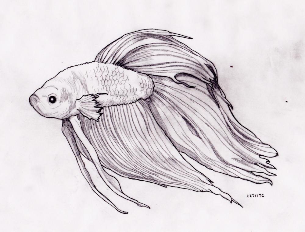 Betta Fish Easy Draw