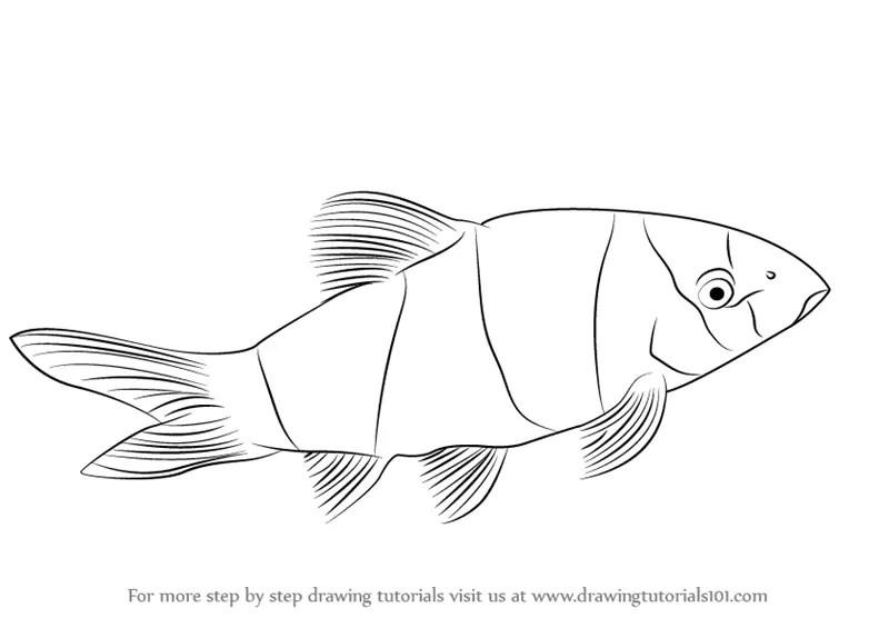 clown fish drawings in pencil