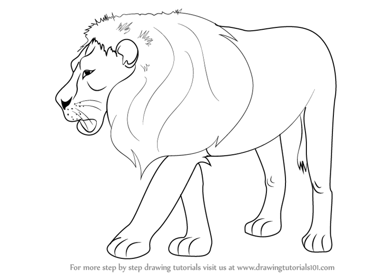 Image of: Images Drawingtutorials101com Learn How To Draw Lion zoo Animals Step By Step Drawing Tutorials