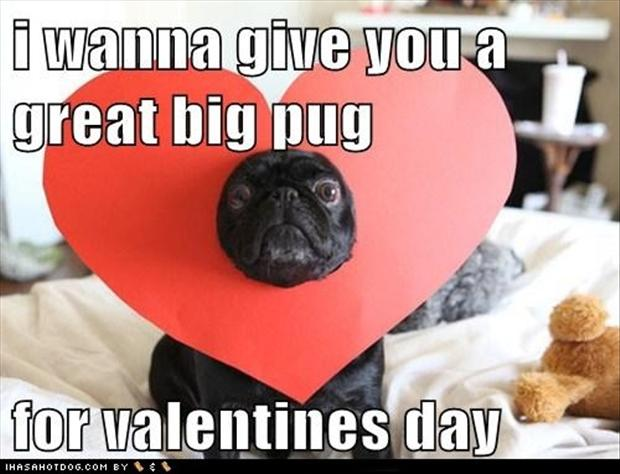 Happy Valentines Day Funny Dogs