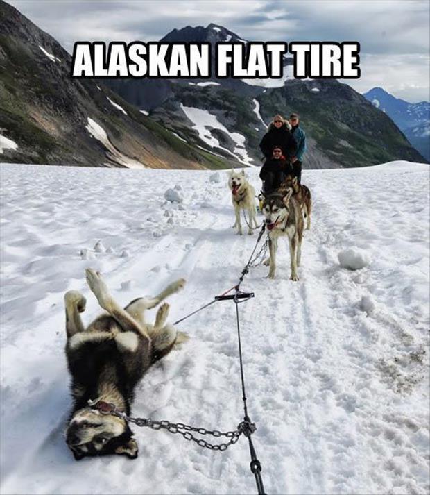Things Do Alaska February