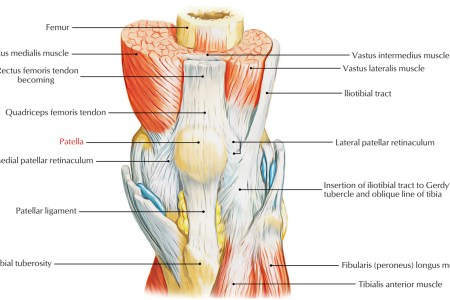 Interior inferior aspect knee full hd maps locations another medial knee injuries wikipedia knee diagram svg chapter the knee dutton s orthopaedic examination evaluation image not available fibular collateral ligament ccuart Images