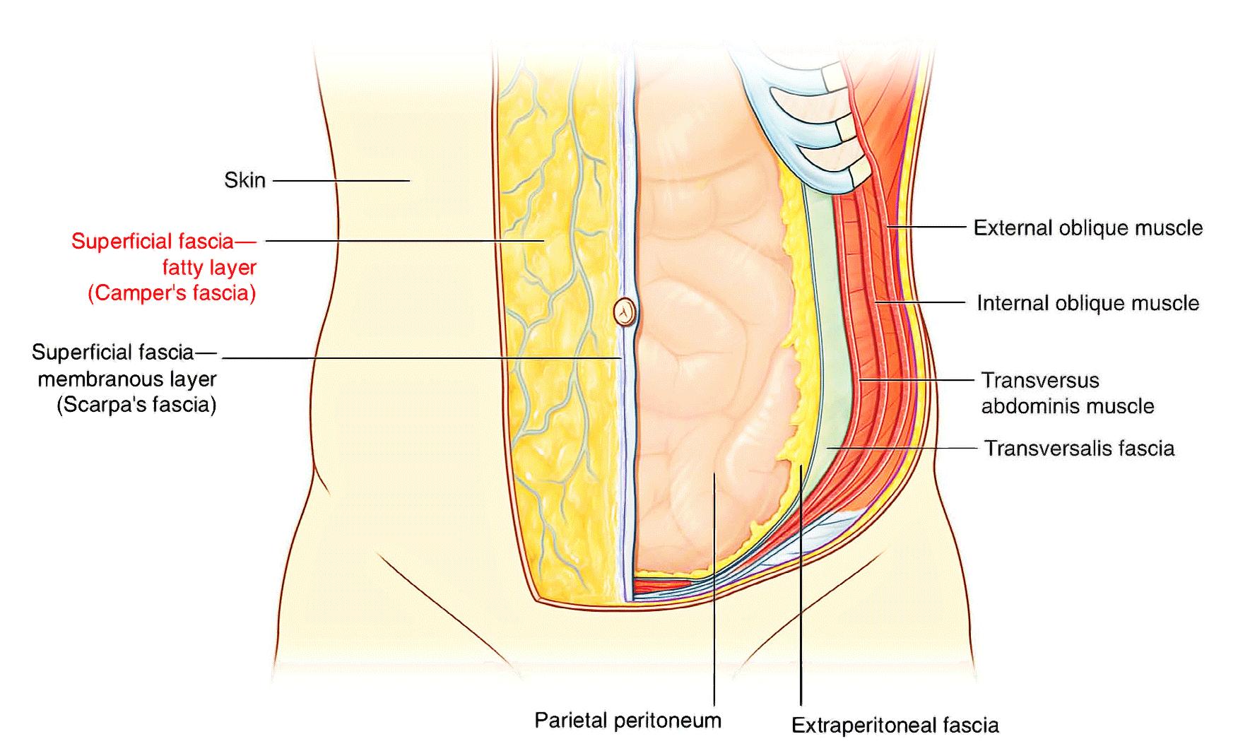 Abdomen Diagram 9 Regions