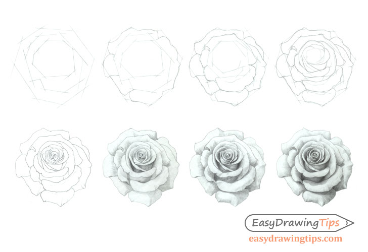How to Draw a Rose Step by Step Tutorial - EasyDrawingTips