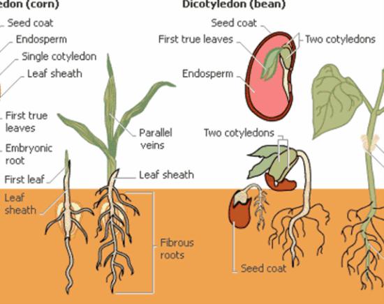 Flowering plants monocotyledon and dicotyledon - RECENT EVENTS