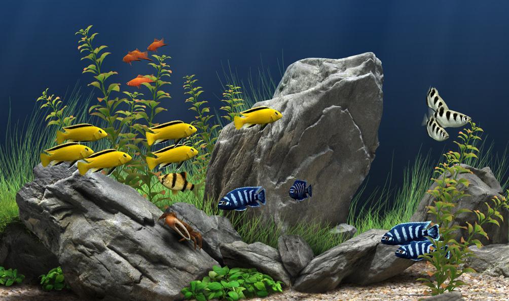 Marine Aquarium Led Lights