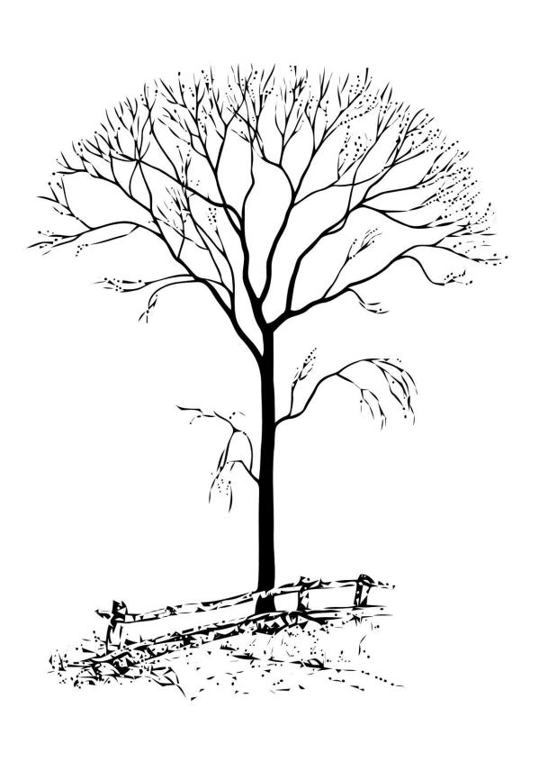 bare tree coloring page # 21