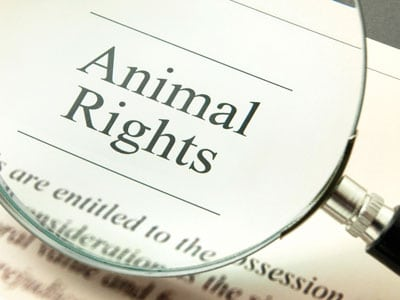 Animal Rights, Human Rights, and Eco Friendly Sustainability