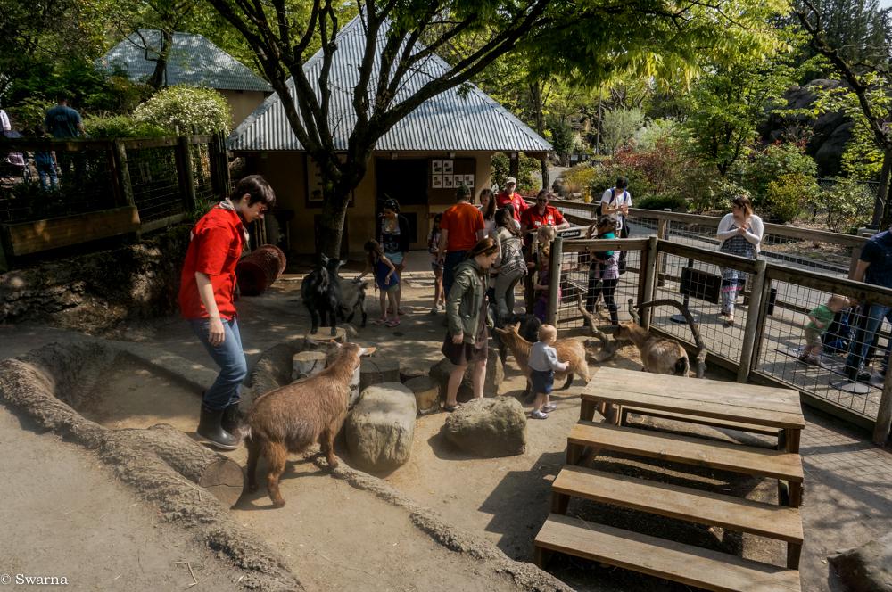 video portland zoo - 600×398