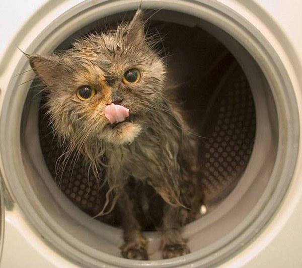 40 Funny photos of wet cat | EpidemicFun.com