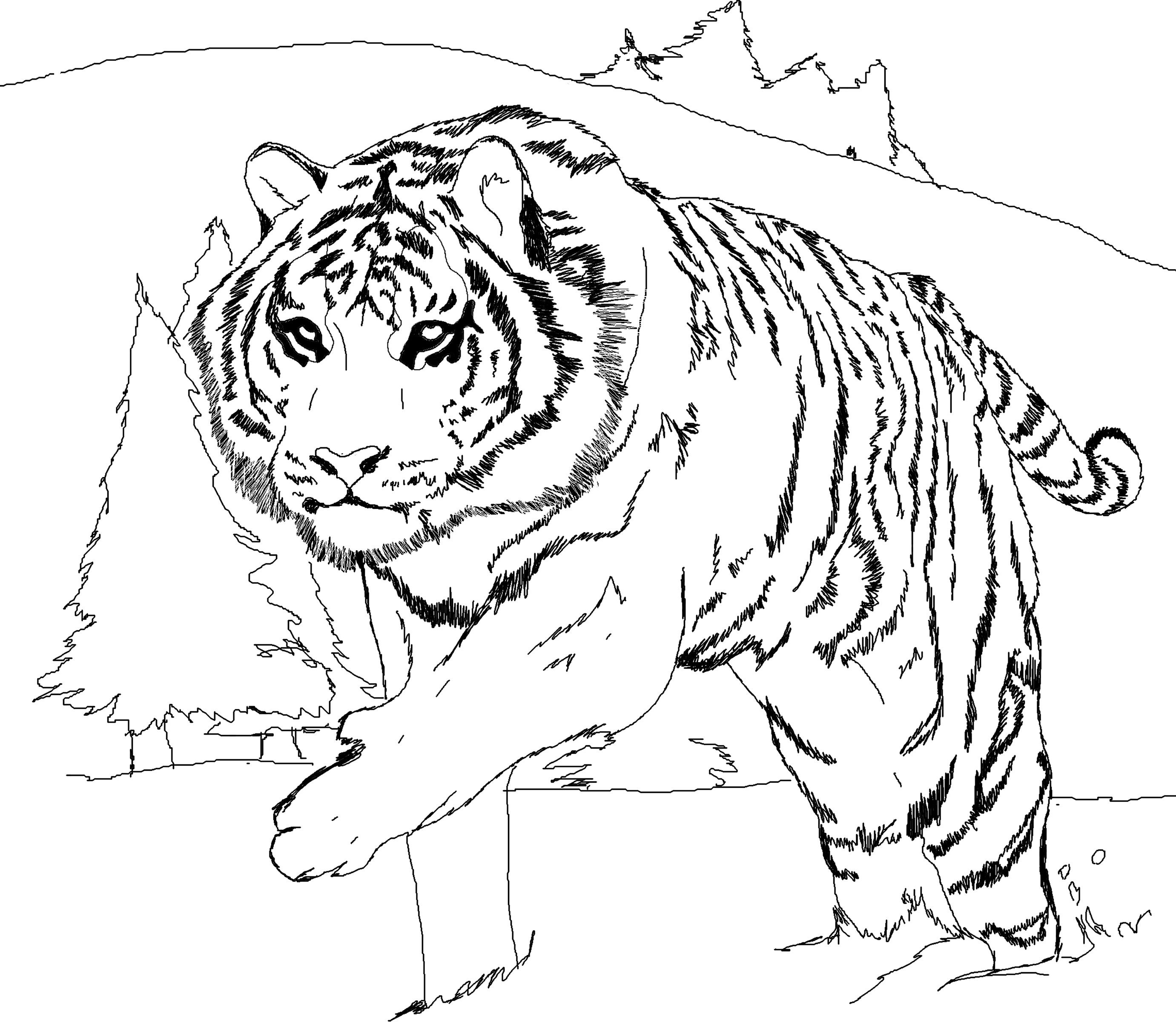 Tiger Coloring Pages Animal Coloring Pages 16 Free Printable