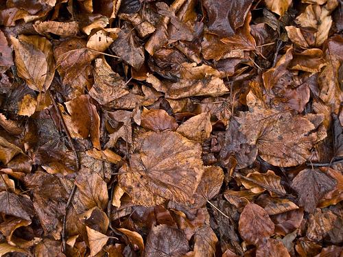 Mulching Fall Leaves