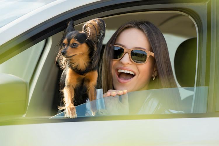 Florida Vehicle Registration Renewal