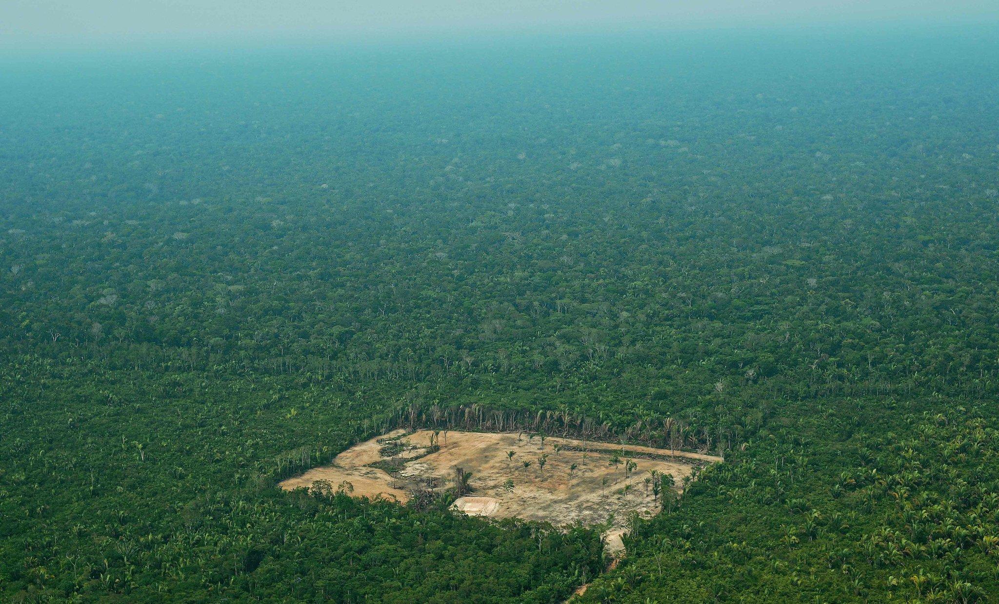 amazon rainforest deforestation - 1200×726