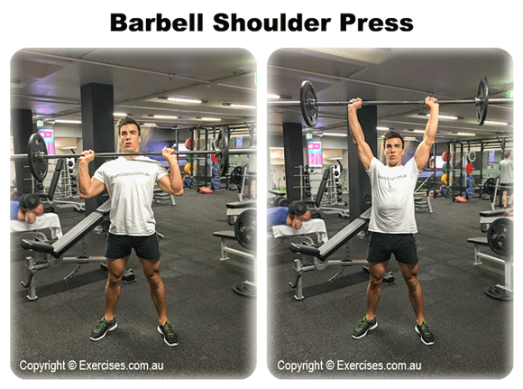 barbell military shoulder press - 580×431
