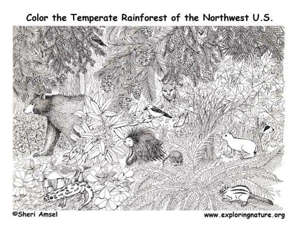 rainforest coloring page # 10