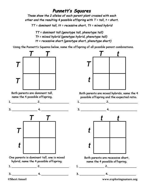 Using Punnett's Square to Show Mendel's Genetics Discoveries
