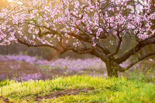 Yard and Garden  Handling Early Flowering Trees and Shrubs in     Flowering Trees