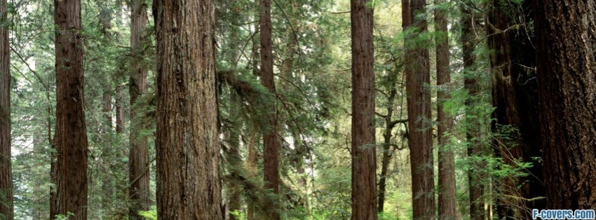 Forest Olympic National Washington Facebook Cover Timeline