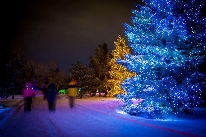 Calgary Zoo Light