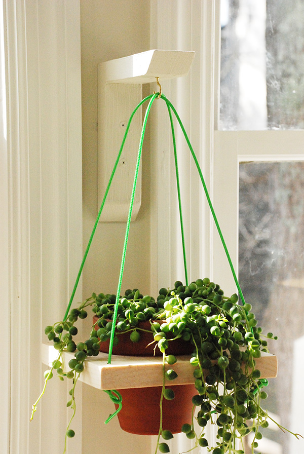 What Plants Put Hanging Baskets