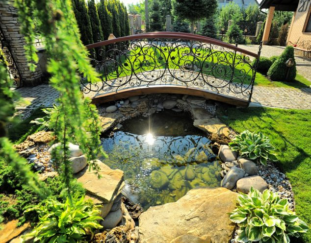 Best Fish Small Garden Pond