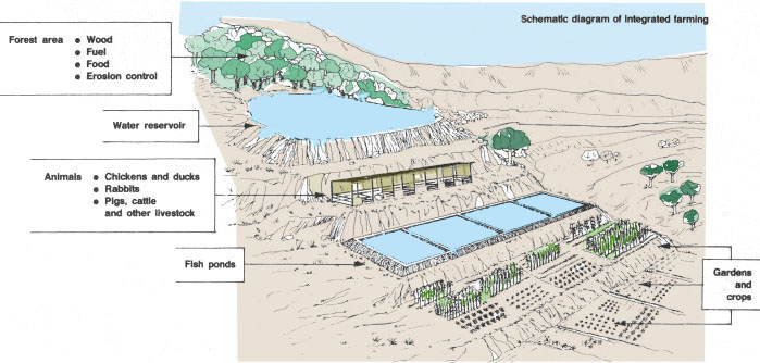 Fish Farming Ponds Design