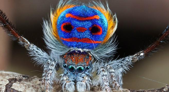 World Nicest Spider