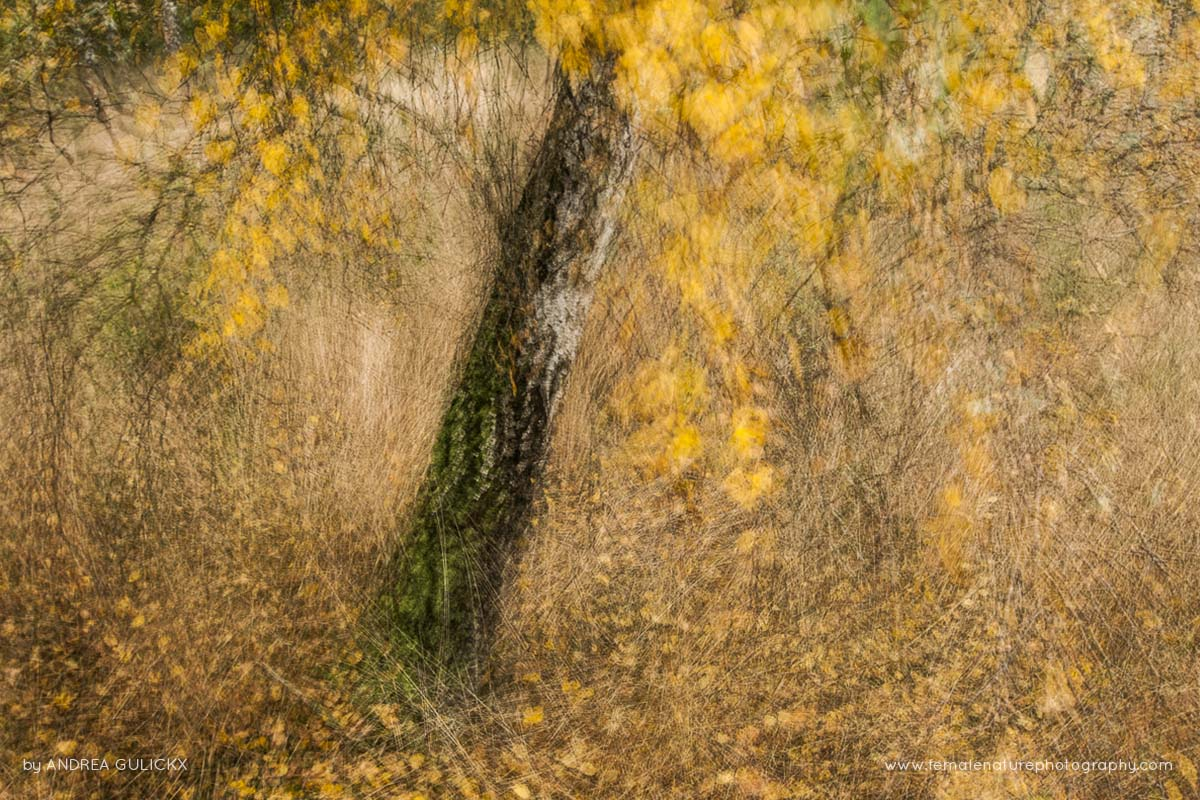 Andrea Gulickx Female Nature Photography