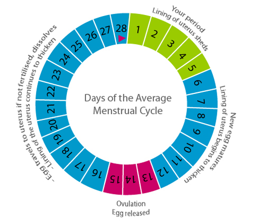 How To Get Ovulation Without Going To Fertility Clinic?
