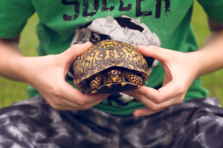 Boy Holding Box Turtle