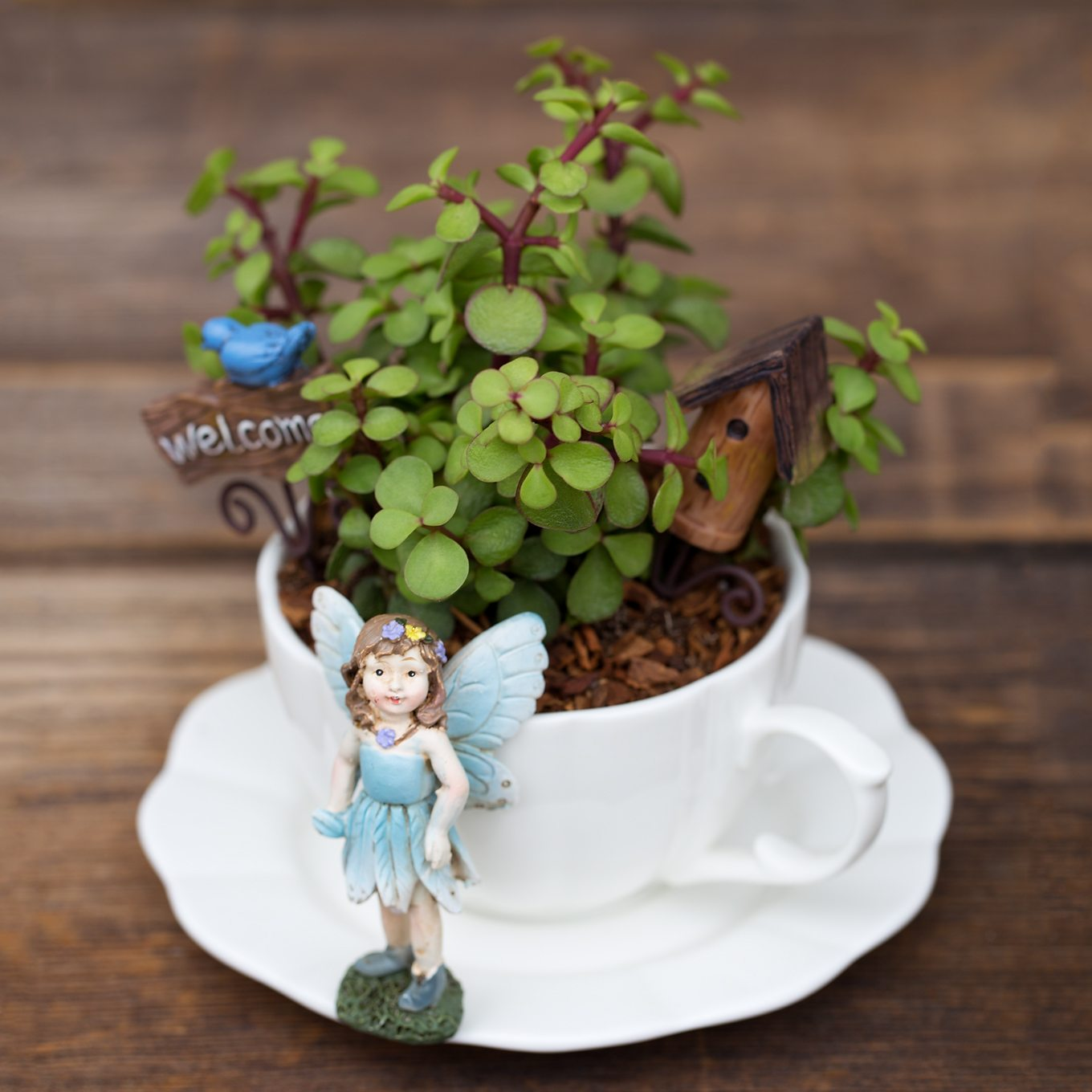 How to Make a Teacup Fairy Garden