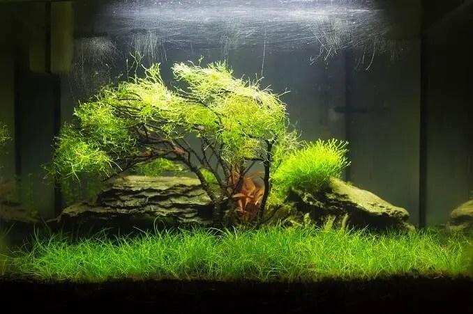 Floating Plants Names