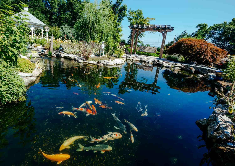 Koi Pond Landscaping