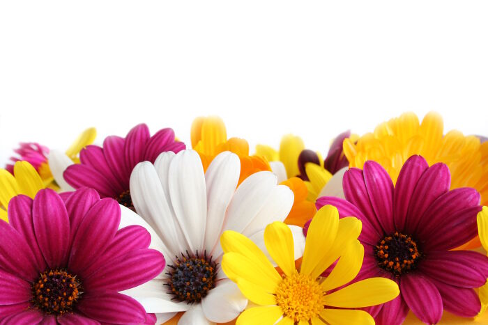 Easter Flowers   Flower Meaning Daisy Flowers