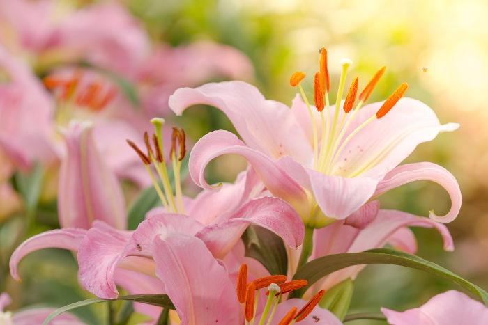 Fresh Lotus Youth Preserve