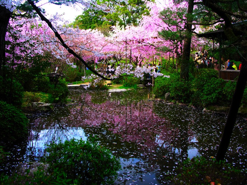 Japanese Garden Pictures   Japan Garden Flowers photo Japanese Garden