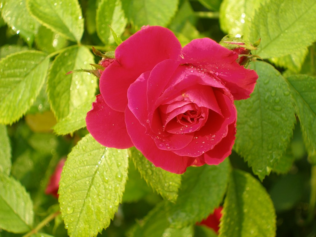 Kinds Flowering Plants