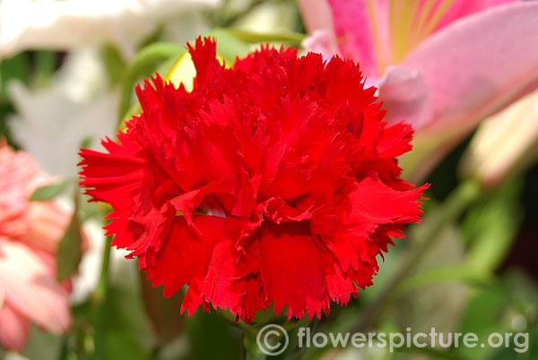 Best Pots Summer Flowers