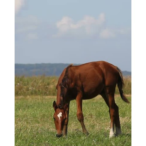 Horse Pasture Mixture - Farm Seeds - Grass Seed - Products ...