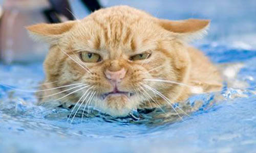 Cats Love Water » Funny, Bizarre, Amazing Pictures & Videos