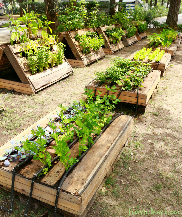 Unique Raised Vegetable Garden
