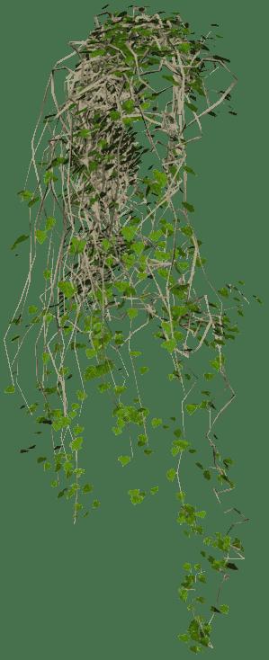 Hanging Vine Plants Indoor
