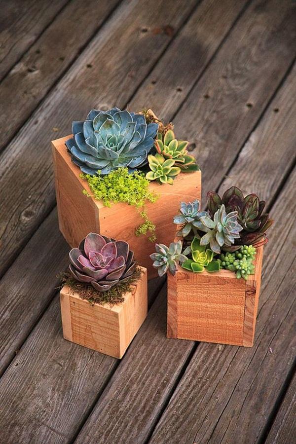 Mini Succulent Garden