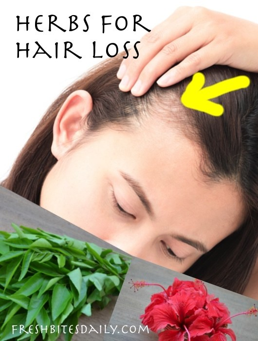 Herbs for Hair Loss     Natural Remedies for Thinning Hair   Fresh     Herbs for Hair Loss   Natural Remedies
