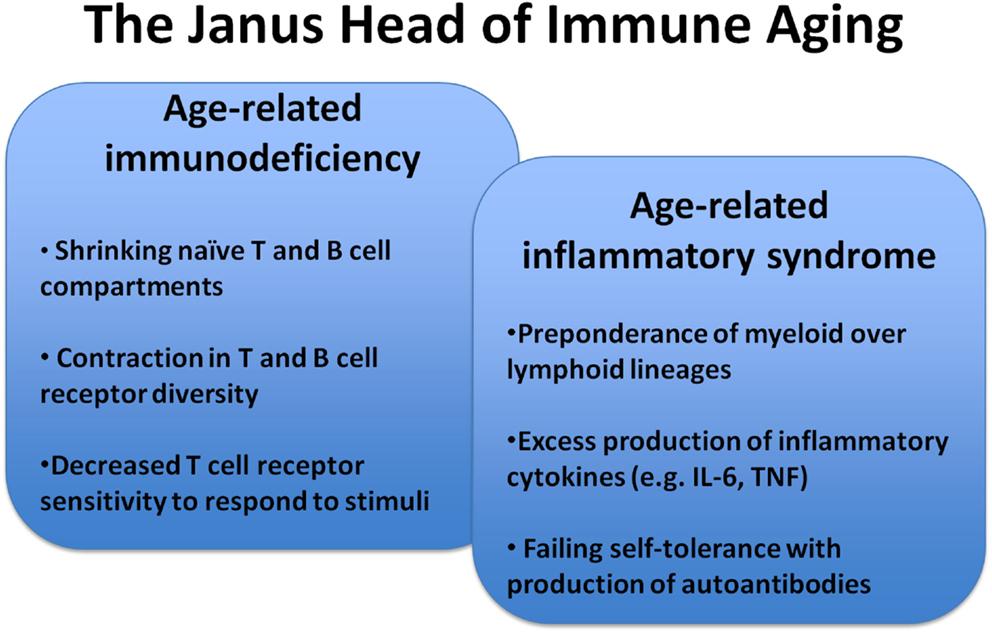 Adaptive Immunity Process